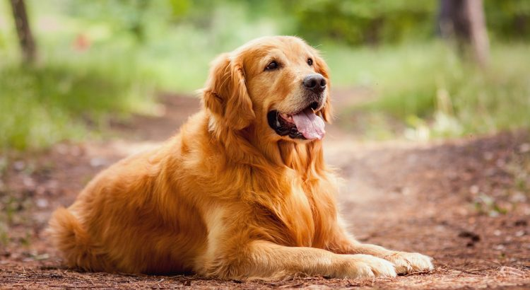 perro sentado